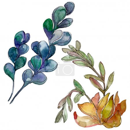Succulents floral botanical flowers. Wild spring leaf wildflower. Watercolor background illustration set. Watercolour drawing fashion aquarelle. Isolated succulent illustration element.