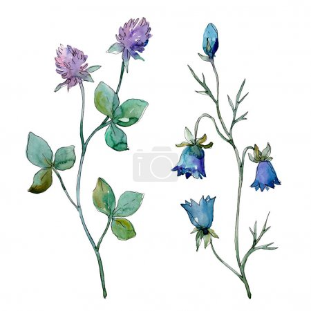 Photo pour Fleurs sauvages fleurs botaniques florales. Fleur sauvage de neige sauvage de feuille de source d'isolement. Ensemble d'illustration de fond d'aquarelle. Aquarelle de dessin à l'aquarelle. Élément d'illustration de fleurs d'isolement. - image libre de droit