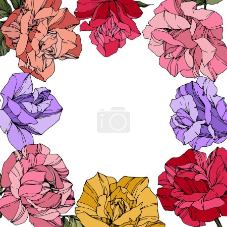 Illustration for Vector Rose flowers. Floral botanical flowers. Red, pink and purple engraved ink art. Floral border square illustration. - Royalty Free Image