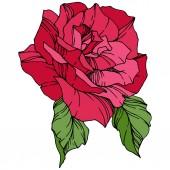 Beautiful Rose Flower Floral botanical flower Red engraved ink art Isolated rose illustration element