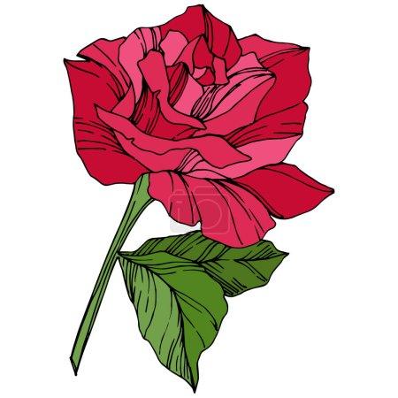 Illustration pour Belle fleur Rose. Fleur botanique floral. Art de l'encre rouge de gravé. Élément isolé illustration rose - image libre de droit