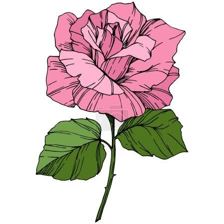 Photo pour Belle fleur de rose. Couleur rose gravé art encre. Elément d'illustration isolé en rose. Fleurs sauvages aux feuilles vertes isolées sur blanc . - image libre de droit