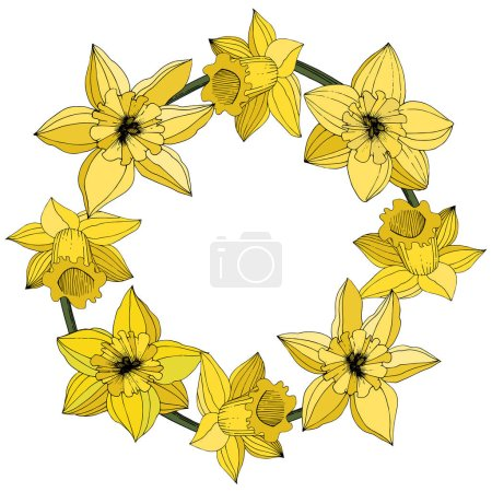 Vector Narcissus flowers. Yellow engraved ink art. Frame floral ornament round on white background.