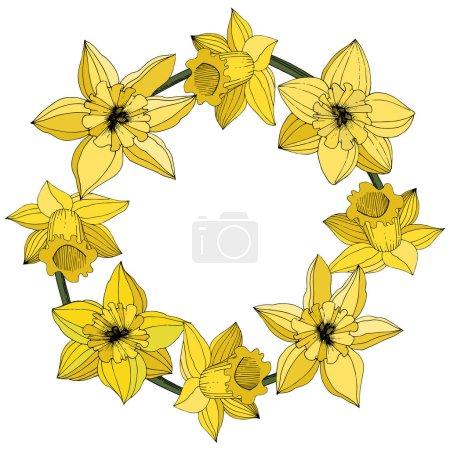 Illustration pour Fleurs vectorielles Narcisse. Encre gravée jaune art. Cadre ornement floral rond sur fond blanc . - image libre de droit