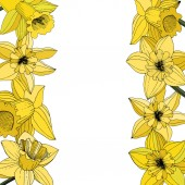 Vector Narcissus flowers. Yellow engraved ink art. Border floral ornament on white background.