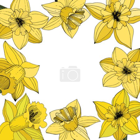 Illustration for Vector Narcissus flowers. Yellow engraved ink art. Frame floral ornament square on white background. - Royalty Free Image