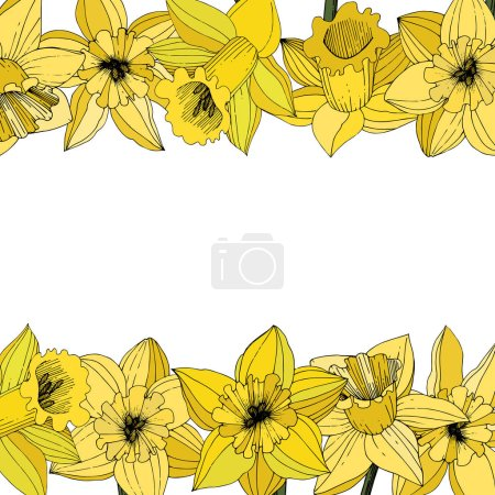 Illustration for Vector Narcissus flowers. Yellow engraved ink art. Border floral ornament on white background. - Royalty Free Image