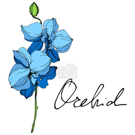 Illustration for Beautiful blue orchid flowers engraved ink art. Isolated orchids illustration element on white background. - Royalty Free Image