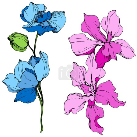 Illustration for Beautiful blue and pink orchid flowers engraved ink art. Isolated orchids illustration element on white background. - Royalty Free Image