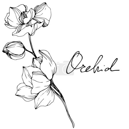 Beautiful black and white orchid flowers engraved ink art. Isolated orchids illustration element on white background.