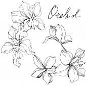 Beautiful black and white orchid flowers engraved ink art Isolated orchids illustration element on white background