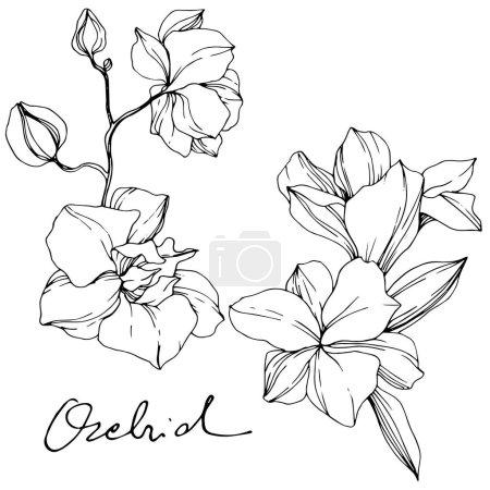 Piękne kwiaty orchidei. Czarno-białe grawerowane sztuki atramentu. Element ilustracja na białym tle storczyki na białym tle.