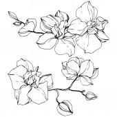 """Постер, картина, фотообои """"Красивые цветы орхидеи. Черный и белый выгравированы чернила искусство. Изолированные орхидеи иллюстрации элемент на белом фоне."""""""