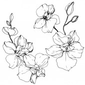 Beautiful orchid flowers Black and white engraved ink art Isolated orchids illustration element on white background