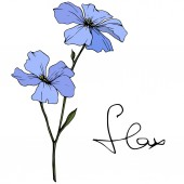 Beautiful blue flax flowers with green leaves isolated on white Engraved ink art