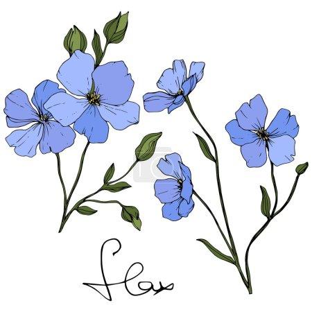 Piękne niebieskie kwiaty lnu z zielonych liści na białym tle. Grawerowane atrament sztuki.
