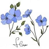 """Постер, картина, фотообои """"Красивые голубые цветы льна с зелеными листьями, изолированные на белом фоне. Художественная гравировка чернил."""""""