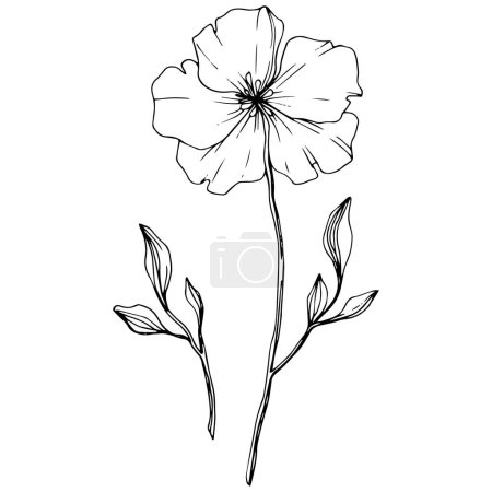Illustration for Vector. Isolated flax flower illustration element on white background. Black and white engraved ink art. - Royalty Free Image