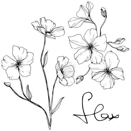 Illustration for Vector. Isolated flax flowers illustration element on white background. Black and white engraved ink art. - Royalty Free Image