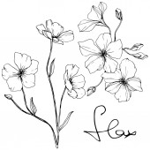 Vector Isolated flax flowers illustration element on white background Black and white engraved ink art