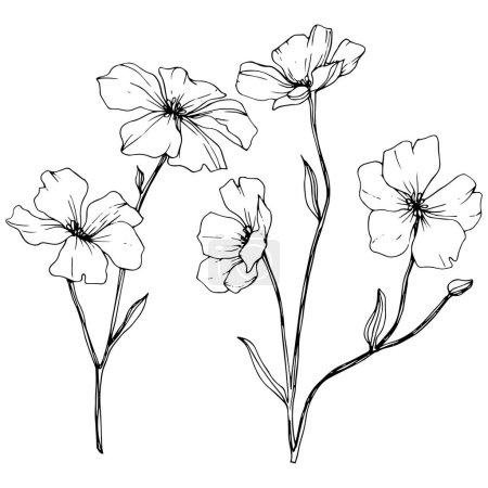 Ilustración de Vector. Elemento de ilustración flores lino aislado sobre fondo blanco. Blanco y negro grabado arte de tinta. - Imagen libre de derechos