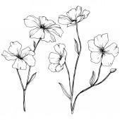 """Постер, картина, фотообои """"Вектор. Элемент иллюстрации в изолированных льна цветы на белом фоне. Черный и белый выгравированы чернила искусство."""""""