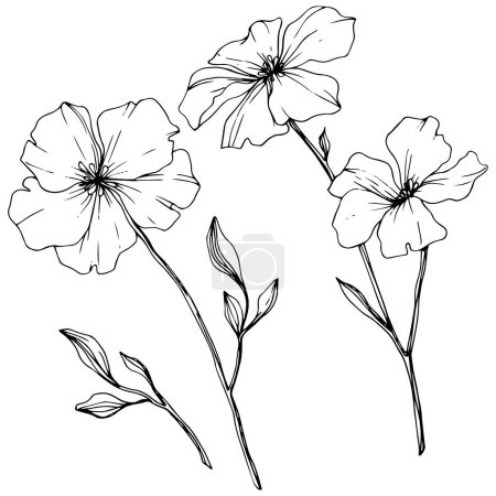 Vector. Isolated flax flowers illustration element on white background. Black and white engraved ink art.
