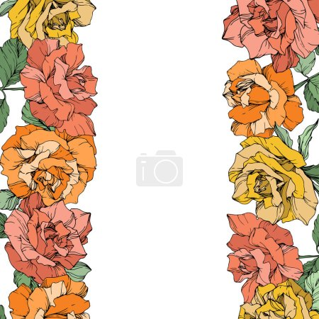Illustration for Vector rose flowers floral borders on white background. Yellow, orange and pink engraved ink art. - Royalty Free Image