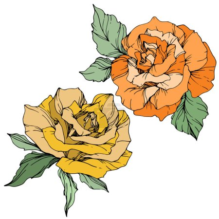Vector. Yellow and orange roses with green leaves isolated on white background. Engraved ink art.