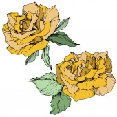 Beautiful yellow rose flowers with green leaves Isolated roses illustration element Engraved ink art