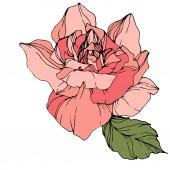 Постер Красивые розовые розы цветы изолированные