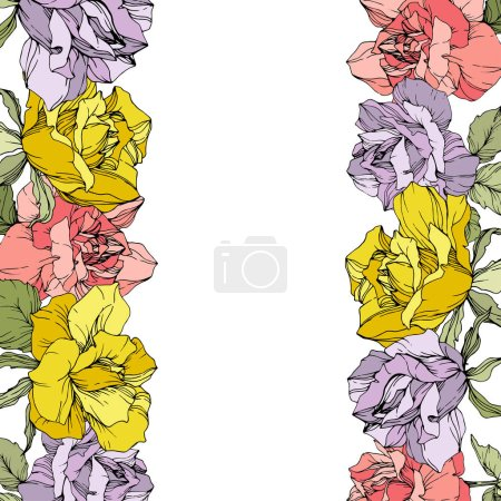Illustration for Vector rose flowers floral borders on white background. Yellow, purple and pink engraved ink art. - Royalty Free Image