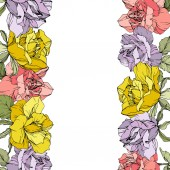 Vector rose flowers floral borders on white background Yellow purple and pink engraved ink art