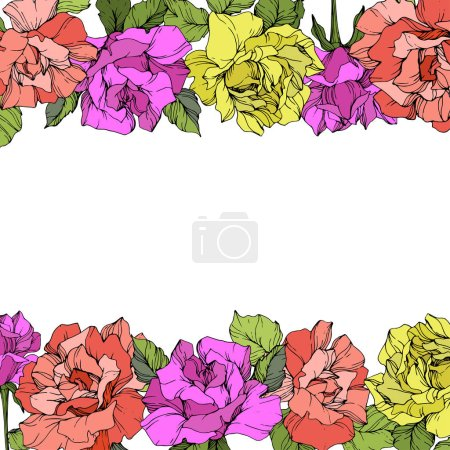 Illustration for Vector. Roses with green leaves floral borders. Purple, yellow and coral roses engraved ink art on white background. - Royalty Free Image