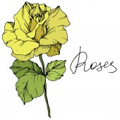 Beautiful yellow rose flower with green leaves Isolated rose illustration element Engraved ink art