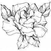 """Постер, картина, фотообои """"Вектор. Роза цветок изолированных иллюстрация элемент на белом фоне. Черный и белый выгравированы чернила искусство"""""""