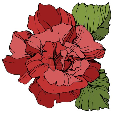 Illustration for Vector red rose flower with green leaves isolated on white background. Engraved ink art. - Royalty Free Image
