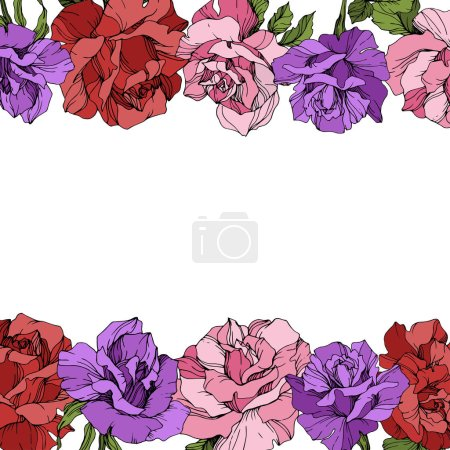 Illustration for Vector. Rose flowers floral borders on white background. Red, purple and pink roses engraved ink art. - Royalty Free Image