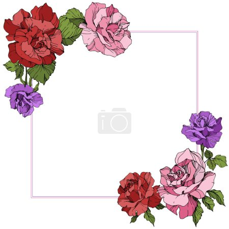 Illustration for Vector. Rose flowers floral square on white background. Red, purple and pink roses engraved ink art. - Royalty Free Image