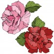 Vector. Pink and red rose flowers with green leave...