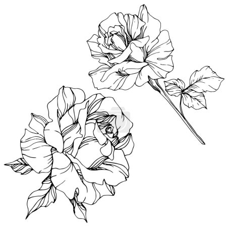 Illustration for Beautiful vector rose flowers isolated on white background. Black and white engraved ink art. - Royalty Free Image
