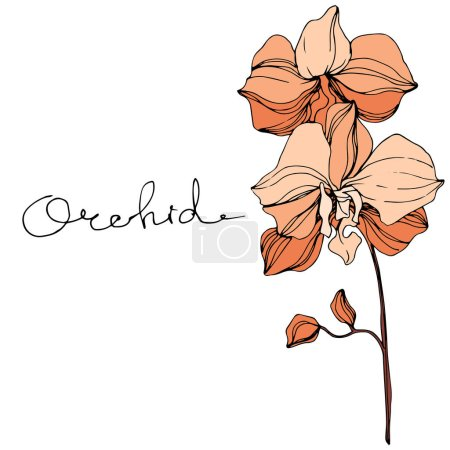 Illustration for Vector orange orchids. Wildflowers isolated on white. Engraved ink art with 'orchid' lettering - Royalty Free Image
