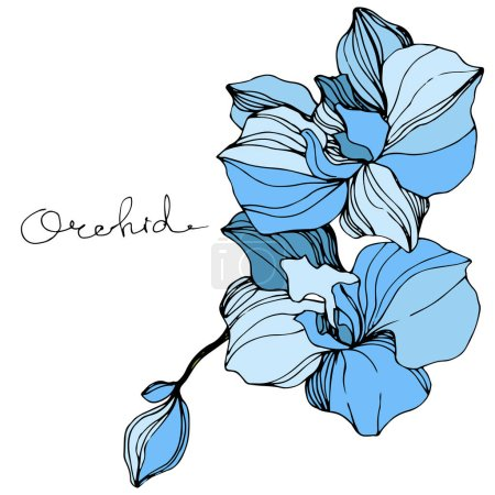 Illustration for Vector blue orchids. Wildflowers isolated on white. Engraved ink art with 'orchid' lettering - Royalty Free Image
