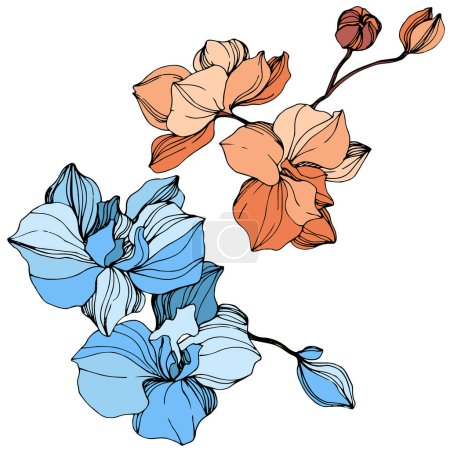 Illustration for Vector orange and blue orchids. Wildflowers isolated on white. Engraved ink art - Royalty Free Image