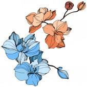 Vector orange and blue orchids Wildflowers isolated on white Engraved ink art