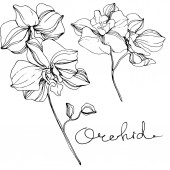 Vector Orchids Wildflower isolated on white Black and white engraved ink art with 'orchid' lettering