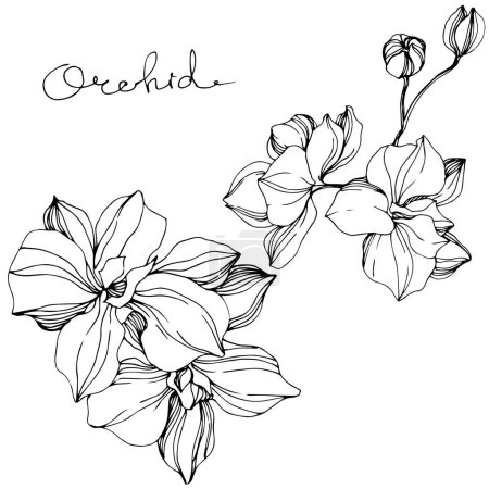 Illustration for Vector Orchids. Wildflower isolated on white. Black and white engraved ink art with 'orchid' lettering - Royalty Free Image