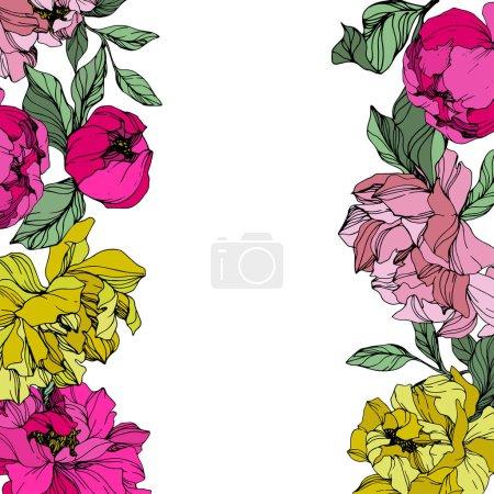 Illustration pour Vecteur Pivoines rose et jaune. Fleurs sauvages isolées sur blanc. Encre gravée. Bordure du cadre floral - image libre de droit