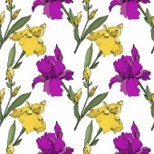 Vector purple and yellow irises Wildflowers isolated on white Engraved ink art Seamless background pattern Wallpaper print texture