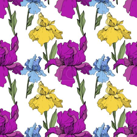 Illustration for Vector purple, blue and yellow irises. Wildflowers isolated on white. Engraved ink art. Seamless background pattern. Wallpaper print texture. - Royalty Free Image